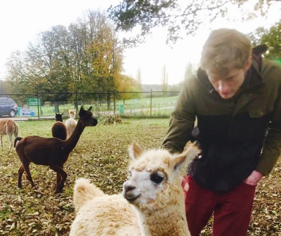 James Acaster standing in a field leans down to pet a while llama