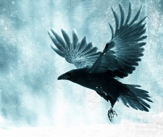 A raven spreads its wings against a frosty blue backdrop